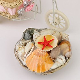 Authentic Seashells - Small