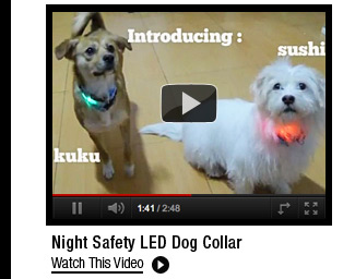 Night Safety LED Dog Collar
